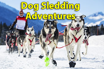 Dog Sledding Adventures