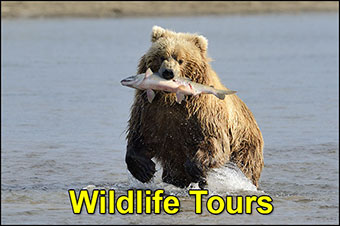 Wildlife Tours Charter Flights To Adventure