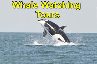 Whale Watching Charter Flights To Adventure