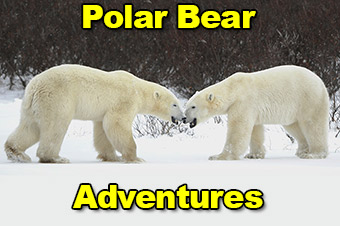 Polar Bear Adventure Network