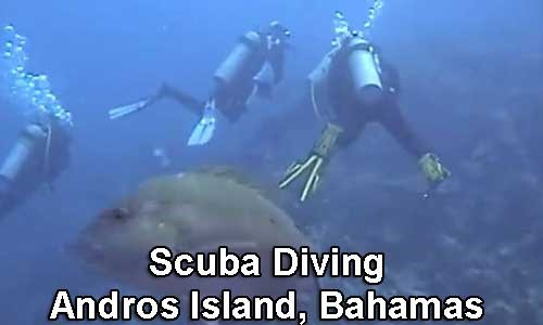Andros-Island-Diving